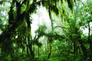 bosque nublado el nogalar_mtramontini